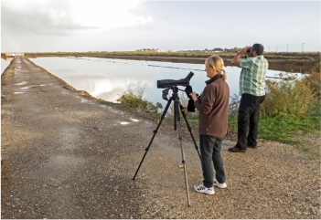 Self-Guided Birdwatching Ria Formosa Natural Park - A Birdwatcher's Paradise